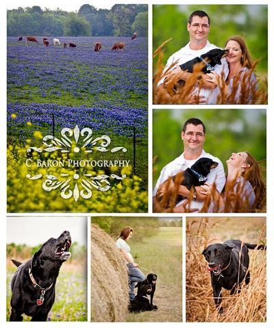 Pet Portraits, Dogs in Bluebonnets, Southeast Texas Pet Photographer, Dog Photos
