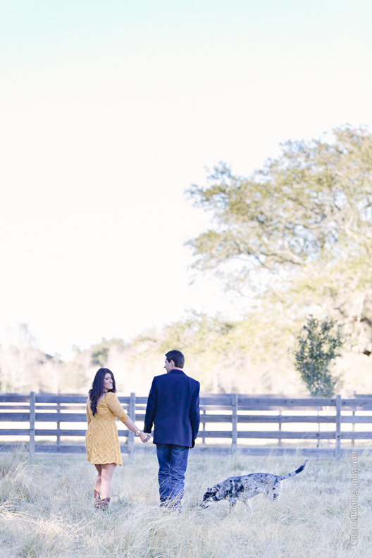 C. Baron Photography, Houston Engagement Photographer, Angleton Engagement Photographer, Out Under the Trees, horses, cows, pony, catahoula, dog, cowboy boots, wagon wheel, rustic, country chic
