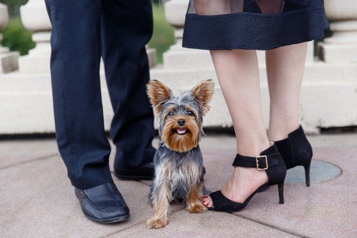 C. Baron Photography, Houston Engagement Photographer, downtown, skyline, Buffalo Bayou, dog, puppy, yorkshire terrier, yorkie, Fall, November, couple