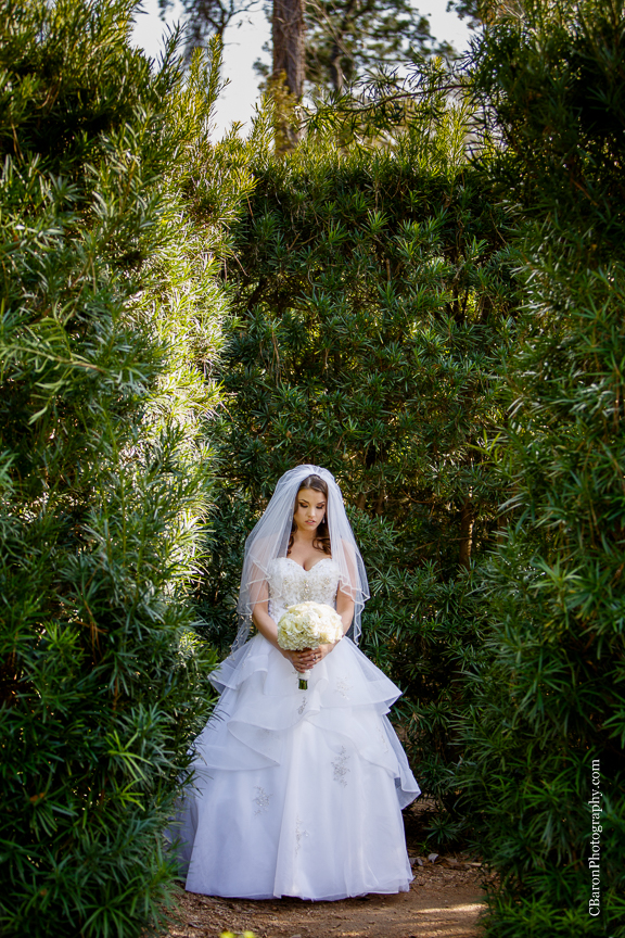 C. Baron Photography, Houston Wedding Photographer, Mercer Aboretum and Botanic Gardens, Humble, Texas, Spring, strapless, Princess Bridal, Alfred Angelo, white, cream, pearls, veil, trees