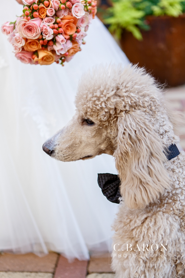 2013; Bridals; C. Baron Photography; Houston; Houston Wedding Photographer; October; Spring; Standard Poodle; Sweet; Texas; Tomball; Treat! Cupcakes; Vintage Park; florals;