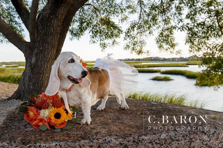 Bassett Hound with flowers; Bridals; C. Baron Photography; Dog; Formals; Fur Baby; Galveston Bridals Photographer; Galveston Wedding Photographer; Gulf Coast Photographer; Houston Bridals; Peach; Southeast Texas; Summer; Sunset; estuary; marsh; orange; tree; water; yellow;