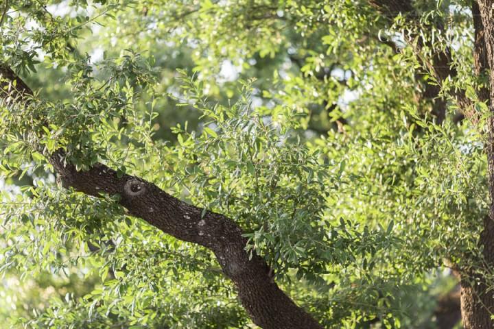 C. Baron Photography; Downtown Houston Texas; Houston Engagement Photographer; bayou; outdoors; summer; trees;