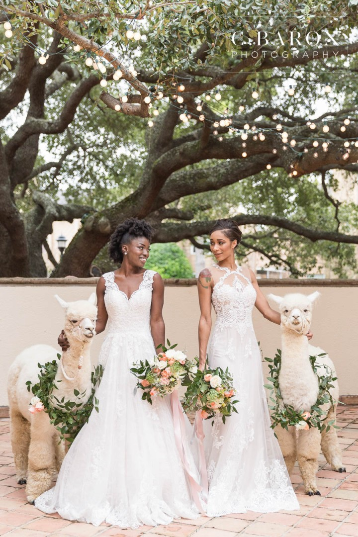 African-American; Alpaca; Animals at Weddings; C. Baron Photography; Gold; Houston Gay Weddings; Houston wedding Photographer; Ivory; Living Coral; Pantone Color of the Year 2019; Peach; Pets at Weddings; Pretty; Roses; Same Sex; Texas Weddings; The Gallery; White Alpaca; green;